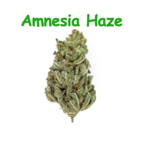 CBD Blüten Amnesia Haze - Dr Green