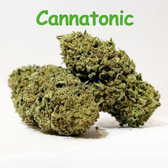 CBD Blüten Cannatonic - Dr Green