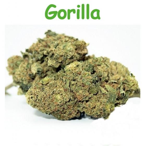 CBD Blüten Gorilla - Dr Green