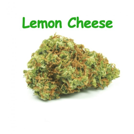 CBD Blüten Lemon Cheese - Dr Green