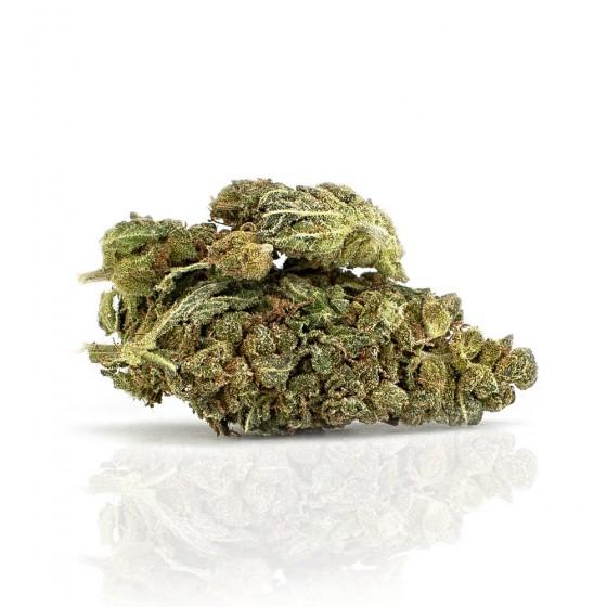 CBD Weed Orange Tree - Woelkchen