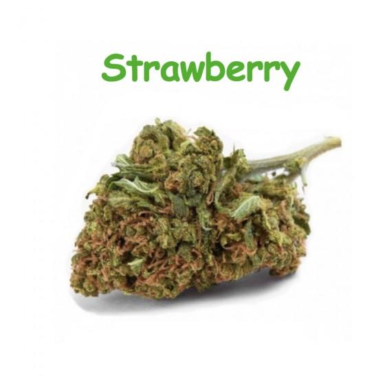 CBD Blüten Strawberry - Dr Green